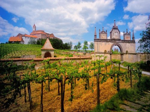 austrian_vineyard