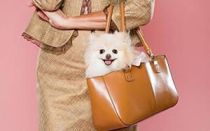 handbag_1631166c