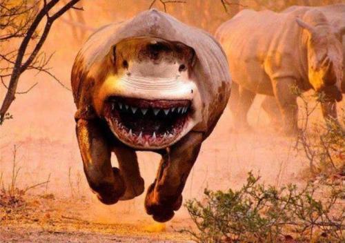 sharkrhino